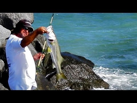Snook Fishing Jetty - Live Bait