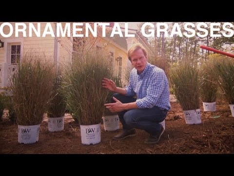 Ornamental Grasses | The Garden Home Challenge With P. Allen Smith