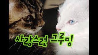 서로 그루밍해주는 귀여운 고양이동영상 Cute cat video grooming each other 互いにグルーミングするかわいい猫のビデオ