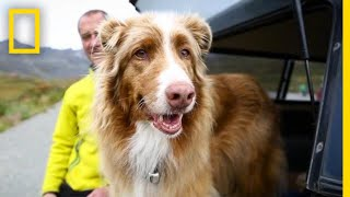 See How This Avalanche Rescue Dog Is Enjoying Her Retirement   Short Film Showcase