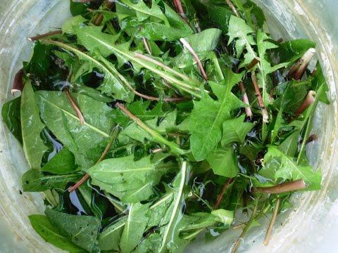 Жидкое удобрение из листьев одуванчиков