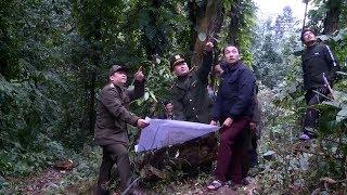 Những người gác rừng mùa xuân ở vùng cao Yên Bái