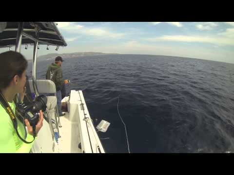 Mako Shark Fly Fishing: Vicious Mako Shark Strike and Jumps