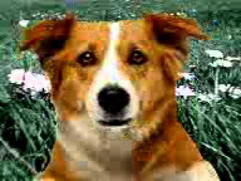 £king^dog.3gp video