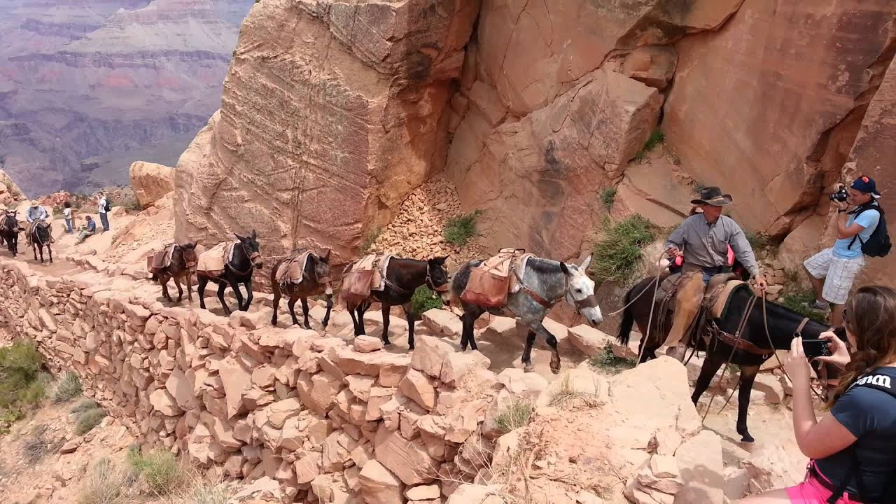 grand canyon mules with Watch on Mohave2 l moreover Scenic Drives together with Grand Canyon National Park likewise I0000MwabSjfofUM additionally Americas Best Swimming Holes.