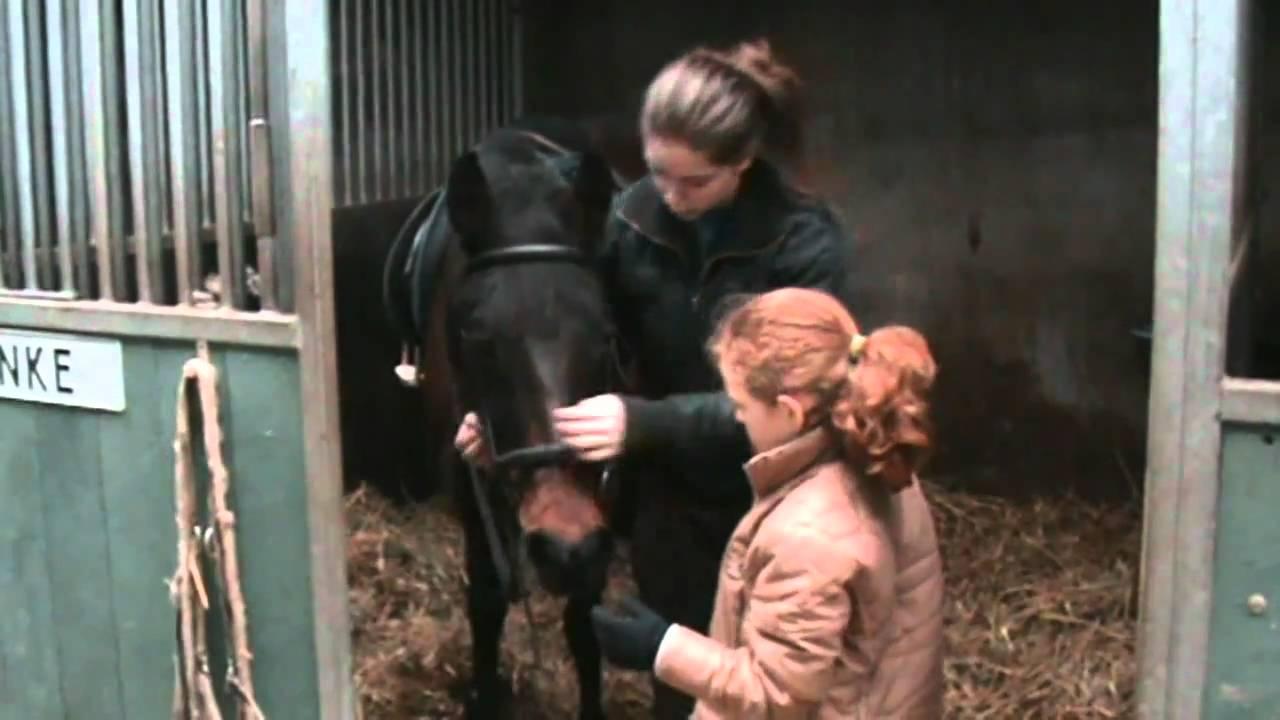 Spreekbeurt Over Paarden Anne Spreekbeurt Over Paarden