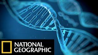 DNA Genesis: The Children of Adam - National Geographic Documentary Films — Full HD Documentaries