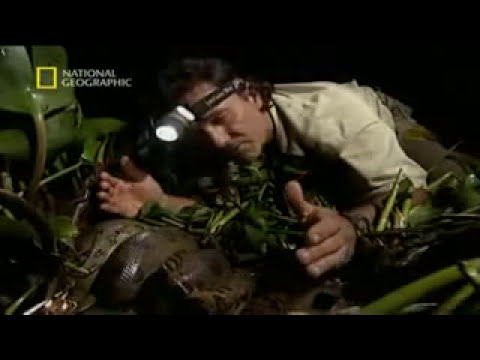 Serpiente Suprema -Documental de Naturaleza