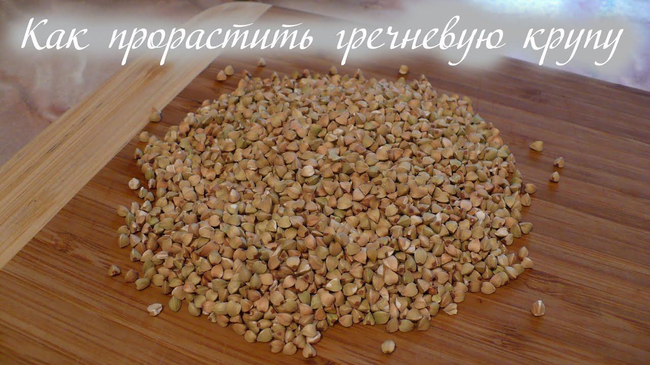 Посев гречки в домашних условиях