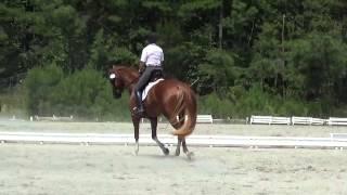 download lagu Jean Riding Usdf Intro. Test C On Dulcinea Hvh gratis