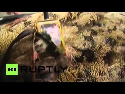 Afghanistan: Bird turned suicide bomber EXPLODES after shot by sniper