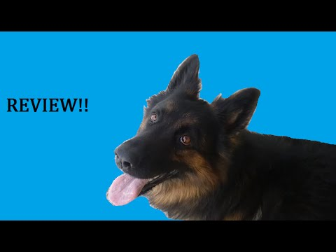 Leela The German Shepherd Dog (GoPro Fetch Dog Harness Review) | How ... German Shepherd Dog Reviews