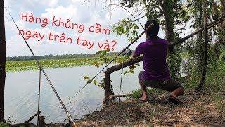 Câu cá Tràm Chim P1: Những tình huống bất ngờ khi câu cá trong rừng. Cá giành mồi luôn trên tay