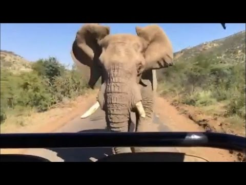 Watch Arnold Schwarzenegger Get Chased By Angry Elephant While on Safari