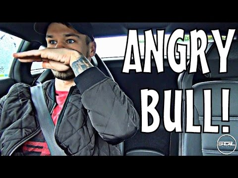 WAKING UP WITH AN ANGRY BULL!
