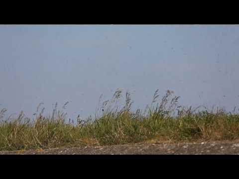 'Muggenwolken' boven Afsluitdijk