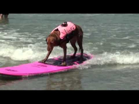 "Surf dog Ricochet s ""pink cadillac"" surfboard... get on board!!"
