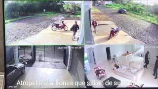 Mira lo que hace cuando descubre que unos ladrones salían de su casa