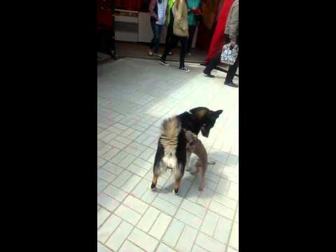 犬が犬の背中を超高速で掻いてあげる♪