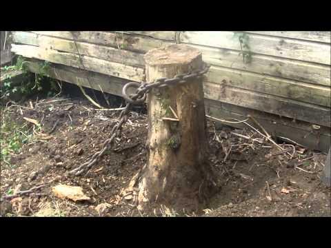 Massey Ferguson 35 Pulling Tree Stump out