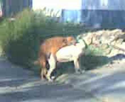 """""""amores perros"""""""