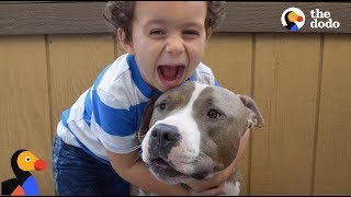 Pit Bull Dog is Boy