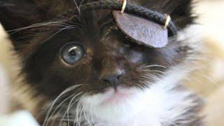 Adorable kitten. Rocking eye patch. Heartwarming story.