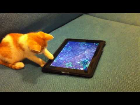 Kitten plays with an iPad