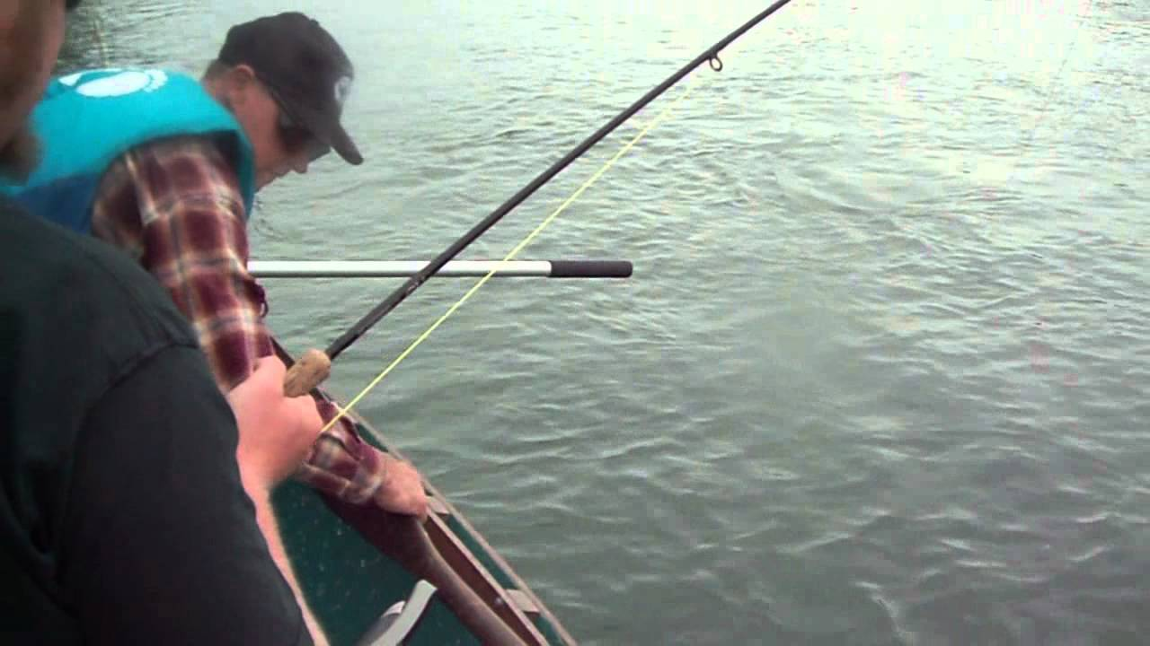 Fly fishing the skagit river for pink salmon fishing for for Skagit river fishing