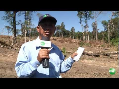 Destroying the forest in Ratanakiri