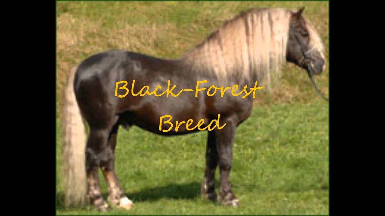 Rare horse breeds - photo#5