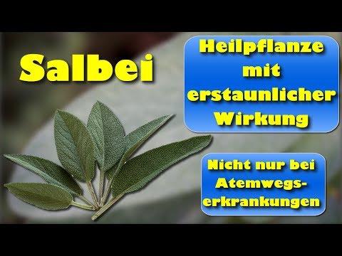Salbei – Heilpflanze mit erstaunlicher Wirkung nicht nur bei Atemwegserkrankungen