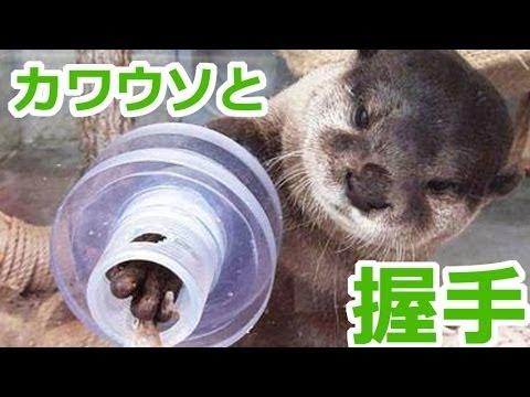 可愛すぎてキュン死!カワウソと握手できる動物園!!