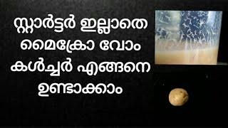 സ്റ്റാർട്ടർ ഇല്ലാതെ എങ്ങനെ മൈക്രോ വോം കൾച്ചർ, micro worm culture without starter in malayalam