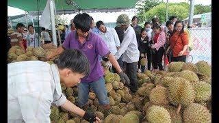 Cả trăm người chen lấn để ăn sầu riêng 19k/kg, kết cục đắng quá đắng ai đi mới hiểu