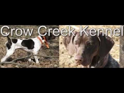 Gun Dogs for Sale Minnesota | Crow Creek Kennel