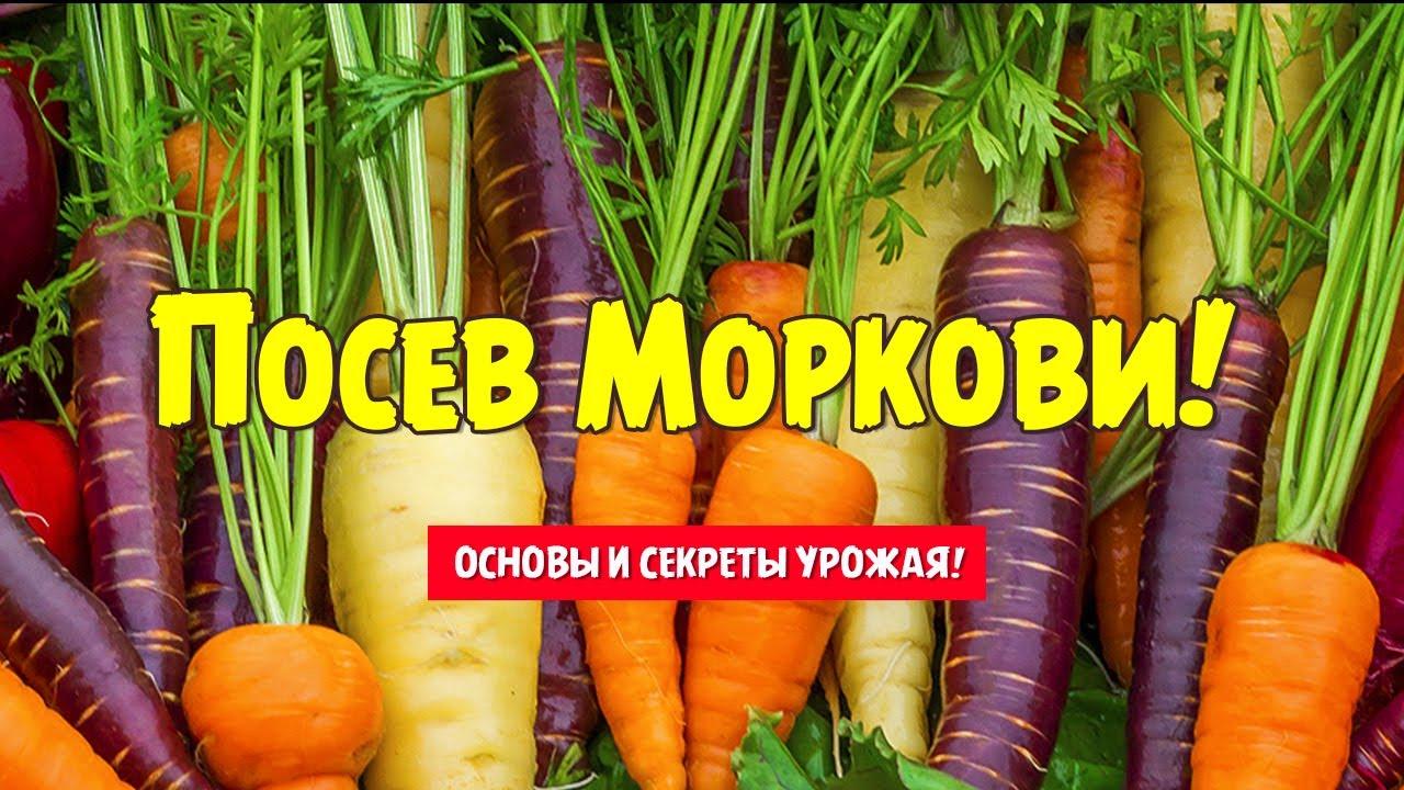 Когда в этом году сажать морковь 156