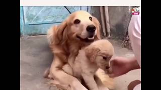 Protective Dog Dad Most Heart Touching Video
