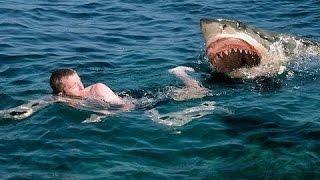 Great white shark attacks caught on tape   Wildlife Documentary   A predator or just misunderstood