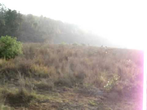 Forest Jeep Safari in Haridwar, Uttrakhand - India Travel & Tours Video