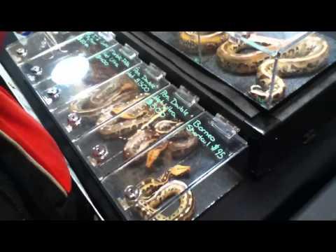 NY Long Island Reptile Expo 03/27/2011