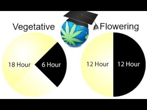 Grow Light Cycle Basics + BLACKOUT Emergency Advice