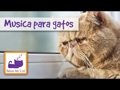 Música para gatos - para relajar gatos estresados para ayudarte a asear a tu gato MUSIC FOR CATS