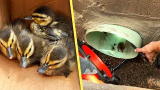 Colorado Firefighters Use YouTube Video To Rescue Baby Ducks