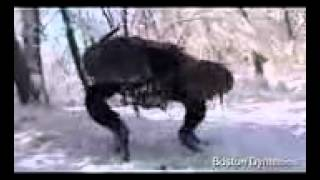 boston dynamics big dog new video march 2008 hi 62748