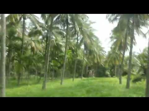 Amazing coconut plantation In south India!