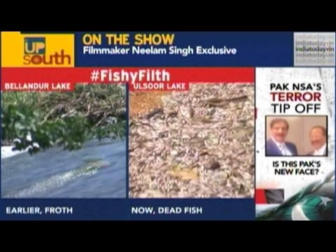 Dead Fish Float In Bangalore Ulsoor Lake Due To Pollution