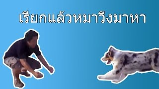 PetOasis : How to Come When Call(วิธีการเรียกสุนัขมาหา)