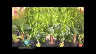 CUIDANDO EL HUERTO. Plantas Ornamentales. 4to Bloque