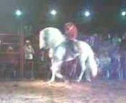 Pendragon montado por el Chapo de Sinaloa 2